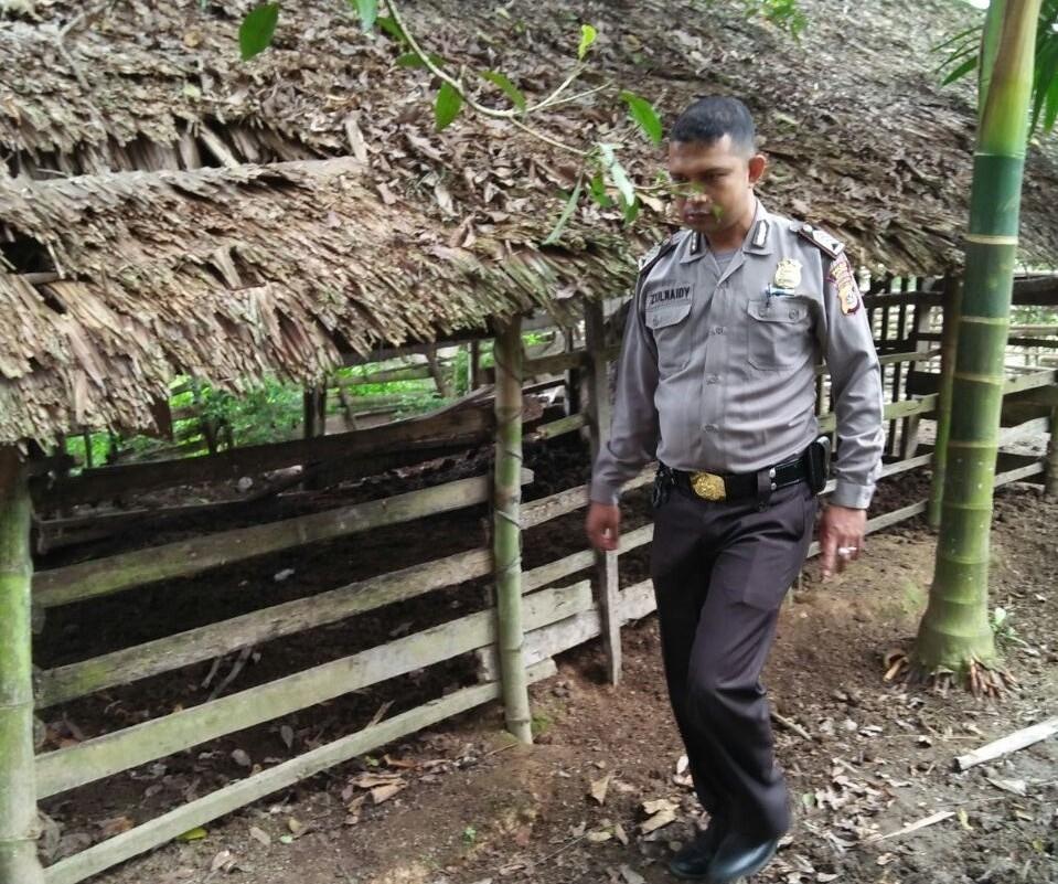 Di Aceh Utara Marak Pencurian Hewan Ternak