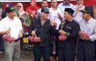 Aceh Tengah Diproyeksikan Jadi Sentra Produksi Bawang Merah