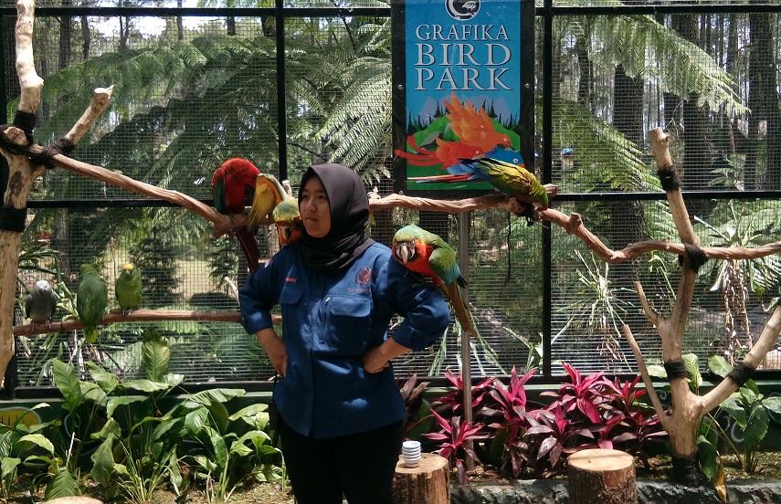 Grafika Bird Park di TWGC Tawarkan Keindahan dan Edukasi
