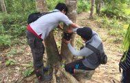 Pantau Keberadaan Harimau Liar, BKSDA Pasang Kamera Pengintai