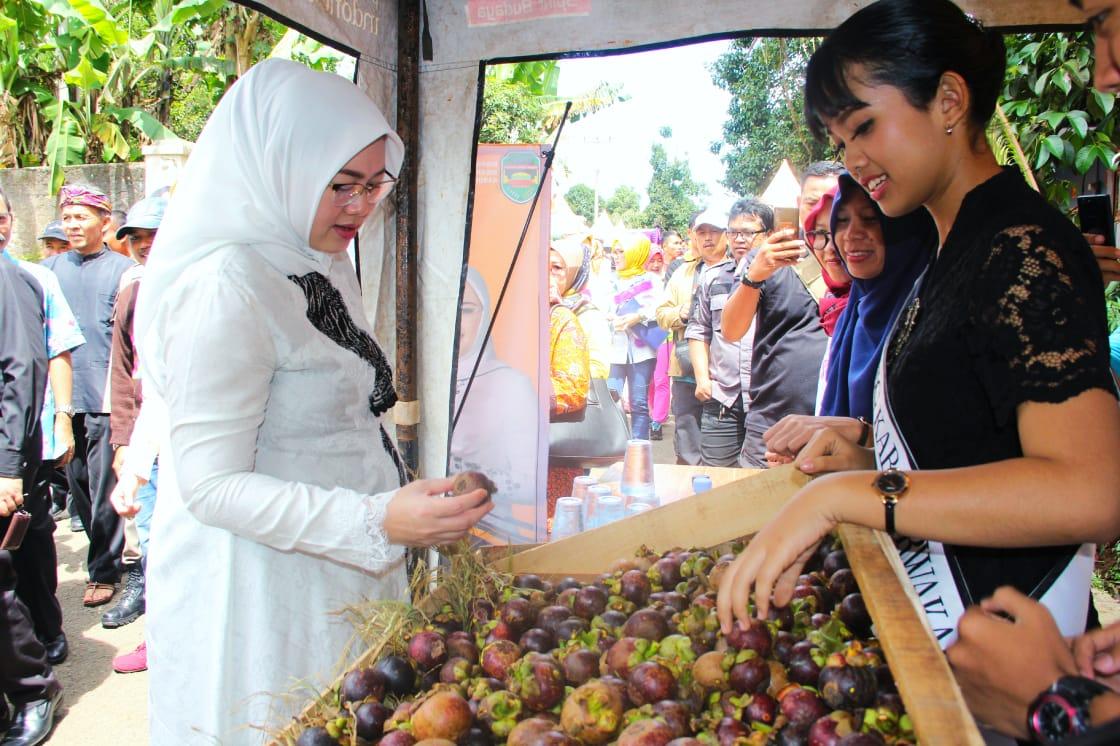 Siapkan Kebun Manggis Seluas 5 Hektar, Bupati Anne Targetkan Jadi Agrowisata