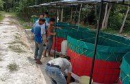 Babinsa Kodim 0104 Aceh Timur Budidayakan Ikan Lele dengan Sistem Bio Flok
