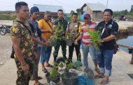 Babinsa Temukan Ratusan Bibit Tanaman Ganja di Kota Langsa