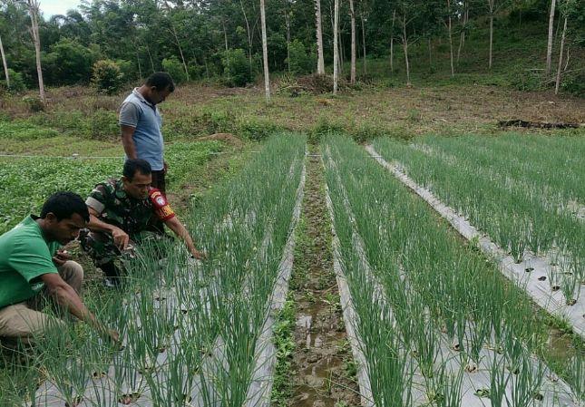 Babinsa Koramil 06 Darul Aman Bantu Petani Bawang Merah Bersihkan Gulma