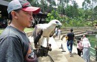 Wahana Permainan dan Koleksi Satwa Unik di Lembang Park and Zoo