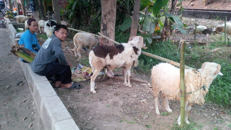 Diskanak Pastikan Hewan Ternak di Purwakarta Bebas Antraks