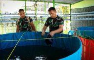 Anggota Kodim 0104 Aceh Timur Manfaatkan Lahan Sempit Sebagai Zona Hydroganik