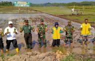 Dukung Ketahanan Pangan, Kodim 0103 Aceh Utara Tanam Padi di Kecamatan Muara Satu