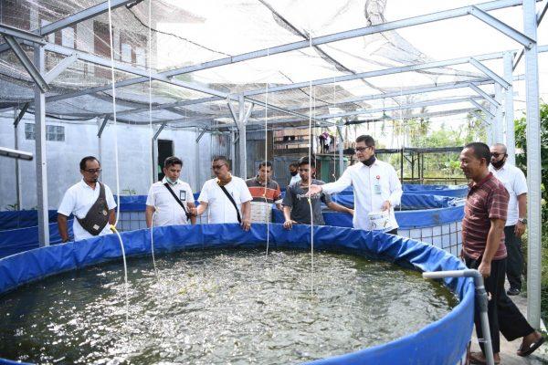 Pebisnis Ikan Lele Beromzet Puluhan Juta Rupiah