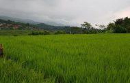 Melirik Potensi Hasil Bumi Aceh Berpeluang Tembus ke Pasar Internasional