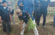 Pemkab Subang Kembangkan Budidaya Tanaman Alpukat