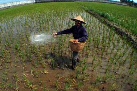 Tahun 2019 Dinas Pertanian dan Perikanan Akan Anggarkan Bantu Kelompok Tani