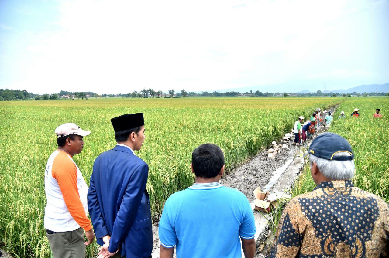 Presiden Tinjau Padat Karya Tunai di Cirebon