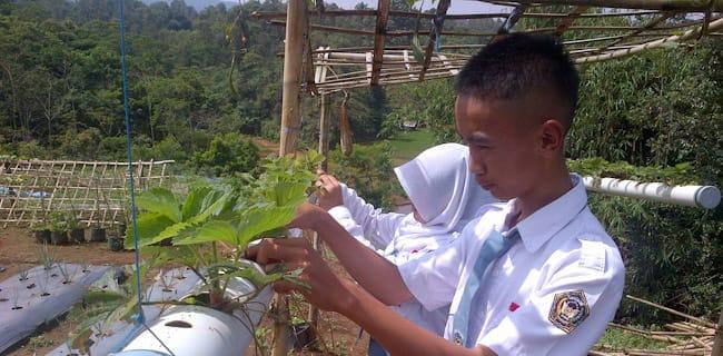 Pemkab Purwakarta Targetkan 1.000 Hektar Areal Persawahan Organik