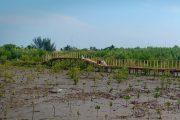 Hutan Mangrove Ramaikan Destinasi Wisata di Karawang