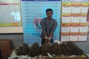 Polres Aceh Utara Ringkus Pengedar Ganja Antar Provinsi