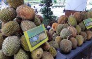 Festival Durian di Mal Festive Walk Karawang Jual Beragam Jenis Durian dan Pohon Durian
