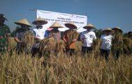 Pertamina EP Budidayakan Program Padi Organik di Karawang