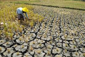 11.723,25 Hektare Sawah di Karawang Mengalami Kekurangan Air