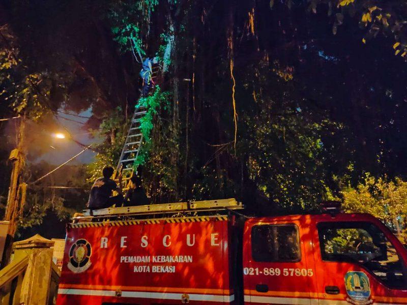 Dianggap Meresahkan Warga, Damkar Evakuasi Sarang Tawon
