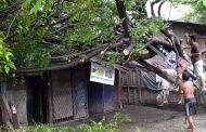 Satu Rumah Rusak Berat Tertimpa Pohon di Bekasi Utara
